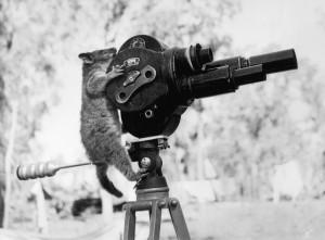 priveste cine filmeaza